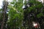 phoca_thumb_l_06-vyzlovka-priroda-jaro-leto-2006
