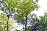 phoca_thumb_l_07-vyzlovka-priroda-jaro-leto-2006