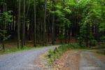 phoca_thumb_l_08-vyzlovka-priroda-jaro-leto-2006