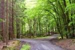 phoca_thumb_l_10-vyzlovka-priroda-jaro-leto-2004