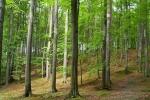 phoca_thumb_l_11-vyzlovka-priroda-jaro-leto-2004