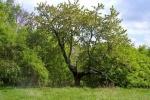 phoca_thumb_l_14-vyzlovka-priroda-jaro-leto-2004