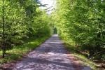 phoca_thumb_l_15-vyzlovka-priroda-jaro-leto-2004