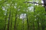 phoca_thumb_l_16-vyzlovka-priroda-jaro-leto-2004