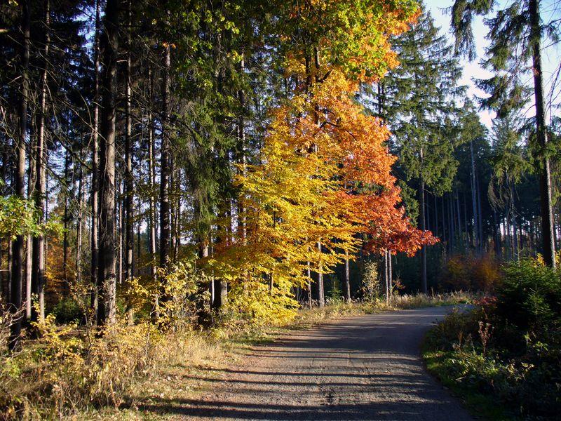08-vyzlovka-priroda-podzim-2006